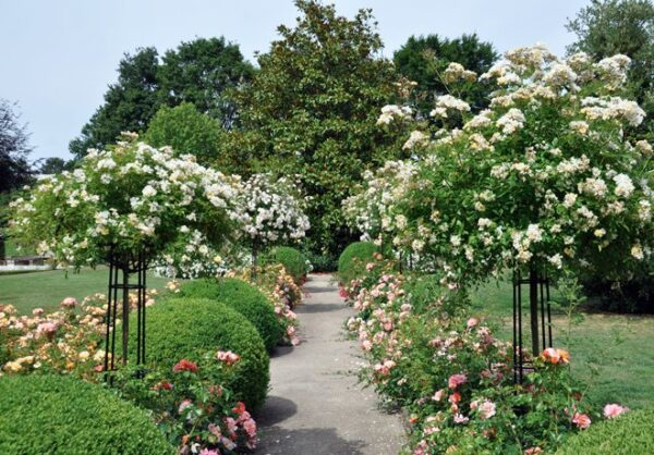 Giverny-Rosentorn