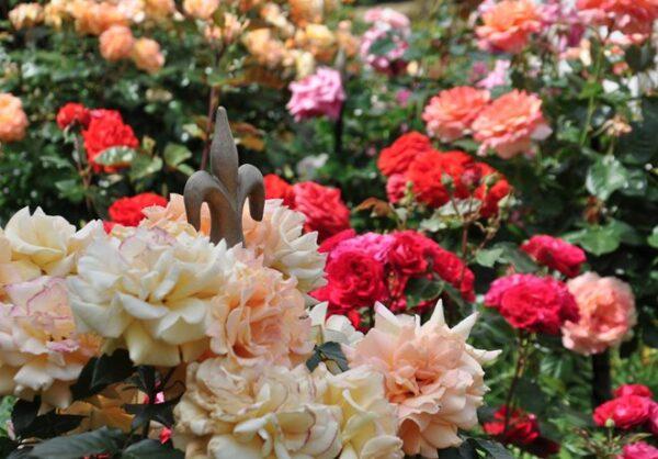 Vacker-rosenpelare-som-stottar-dina-vaxter-fran-Vansta-Tradgard