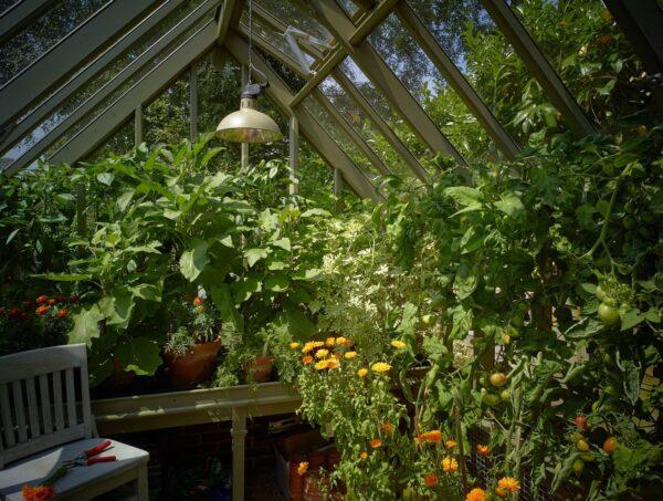 växthus interiör Vansta trädgård